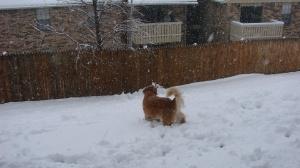2 10 snow 013