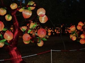 chinese lantern 007