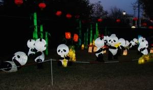 chinese lantern 010