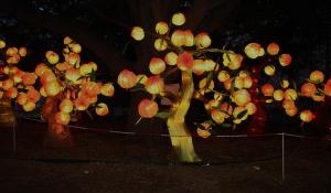 chinese lantern 011