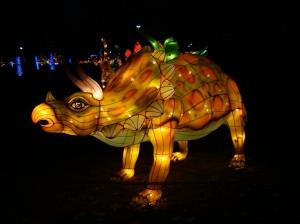 chinese lantern 027