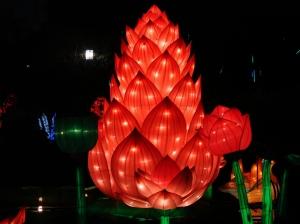 chinese lantern 032