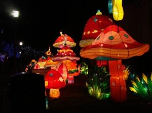 chinese lantern 041