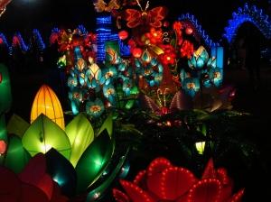 chinese lantern 043