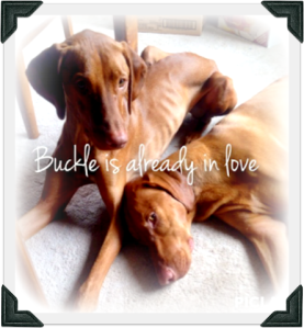 bucknhadx