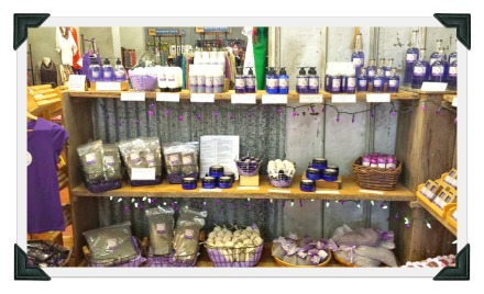 Blanco Texas market days-gcc-lavender