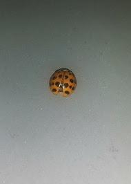 ladybugx